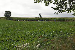 les pèlerins des maïs 2016_1