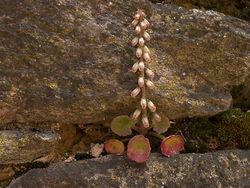 au creux des rochers