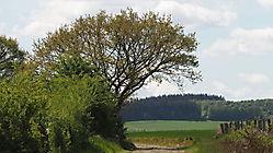 Chemin près de Hargimont